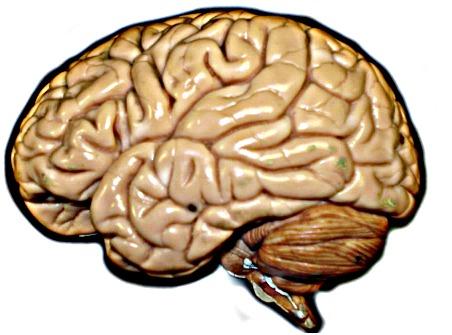 Brain_hirez.jpg
