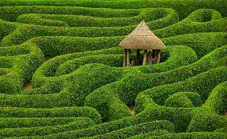 maze garden 2.jpg
