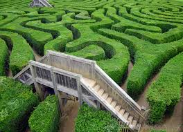 maze garden.jpg