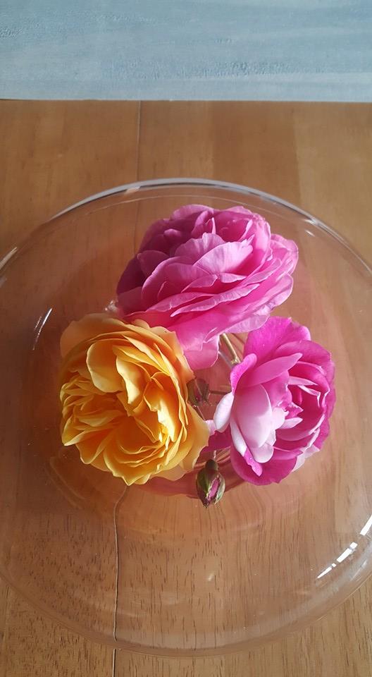 Roses from Andrea's garden.jpg